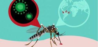Zika Virüsü Nedir ve Belirtileri Nelerdir?