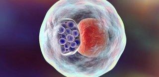 Klamidya Enfeksiyonu Nedir ve Nasıl Bulaşır?