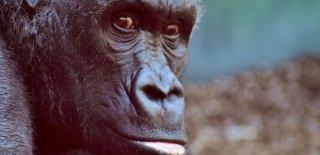 Maymun Burcu Genel Özellikleri