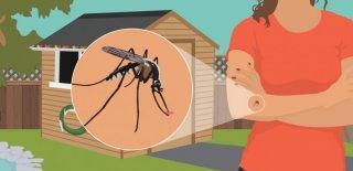 Sivrisineklerden Kurtulmanın 6 Doğal Yolu