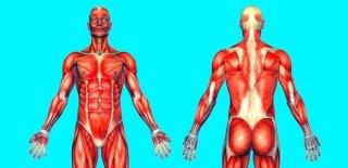 Dermatomiyozit Nedir? - Teşhisi ve Tedavi Yöntemleri