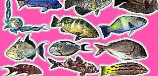Deniz Canlıları İlaçları