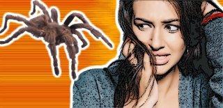 Örümcekleri Evinizden Uzak Tutmak İçin 7 Yol