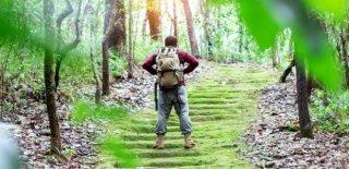 Orman Yürüyüşünün Sağlığımıza 7 Faydası