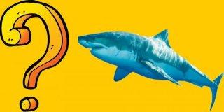 Köpek Balıklarının Bilinmeyen 15 Sırrı