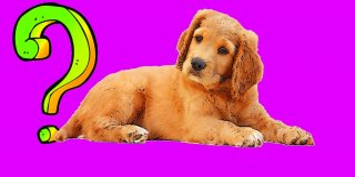 Köpeklerde Sara (Epilepsi) Nöbeti