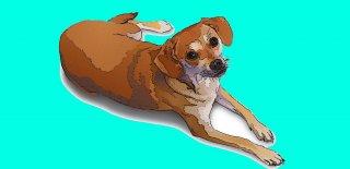 Köpeklerde Raşitizm Hastalığı