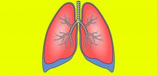 Akciğer Hakkında Bilinmesi Gerekenler