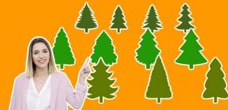 Çam Ağacı Çeşitleri ve Evde Bakım Önerileri