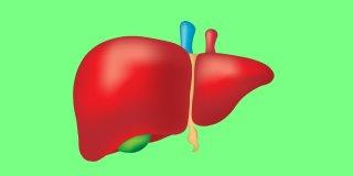 Karaciğer Kanseri Nedir, Nedenleri, Belirtileri ve Tedavisi