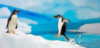 Buzlarla Kaplı Kıta Antarktika'da Yaşam