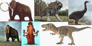 Nesli Tükenmiş 7 Hayvan