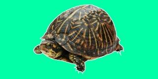 Rüyada Kaplumbağa Görmek Ne Anlama Gelir?
