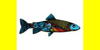 Balıklar ve Balık Türleri