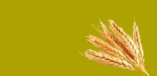 Rüyada Buğday Görmek Ne Anlama Gelir?
