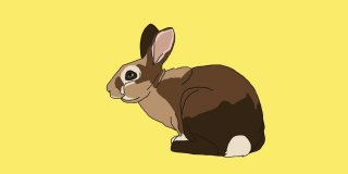 Rüyada Tavşan Görmek Ne Anlama Gelir?