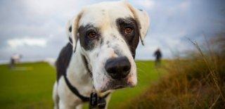 Billy Cinsi Köpek Bakımı ve Özellikleri