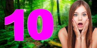 Orman Zengini 10 Ülke
