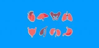 Benzedikleri Organa Yararlı Olan Besinler