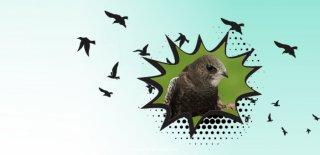 Ebabil Kuşu Nedir? Hikayesi ve Özellikleri Nelerdir?