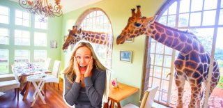 Nairobi Zürafa Oteli - Zürafalarla Uyanıp Birlikte Kahvaltı Yapmak