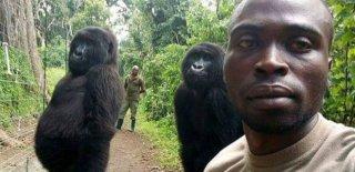 Bakıcılarıyla Poz Veren Goriller Sosyal Medyada İlgi Odağı Oldu!