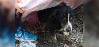 Yaşlı Köpek Ailesine Dönmek İçin Mezarından Çıktı