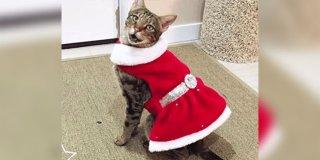 Polisle Başı Belada Olan ve Hapis Yatan Kedi: Miska!
