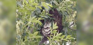 Kafasına Kovan Düştü Binlerce Arının Saldırısına Uğradı!
