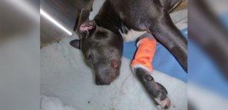 Vicdansız Adam Yavru Köpeği Tekmeleyerek Kafatasını Kırdı!