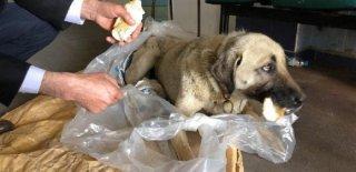 Evin Enkazı Altında Kalan Köpeğin Yardımına Sahibi Yetişti