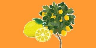Rüyada Limon Ağacı Görmek Ne Anlama Gelir?