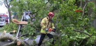 Sarıyer'de Tır'ın Çarptığı Ağaç Otobüs Durağına Devrildi