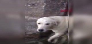 İtfaiye Demir Parmaklıklara Sıkışan Köpeği Böyle Kurtardı!