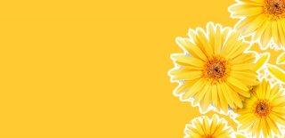 Rüyada Sarı Çiçek Görmek Ne Anlama Gelir?