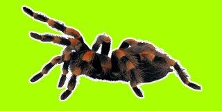 Rüyada Örümcek Görmek Ne Anlama Gelir?