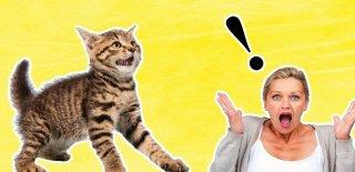 Önlem Almazsanız Kedilerin Eve Verebileceği 10 Çılgın Zarar!