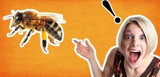 Arılar Hakkında Hayrete Düşeceğiniz 15 İnanılmaz Bilgi!