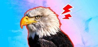 Gökyüzünün Hakimi Kartallar Hakkında 20 İlginç Bilgi!