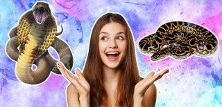 Yılanlar Hakkında Daha Önce Duymadığınız En İlginç 20 Bilgi!