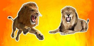 Ormanların Kralı Aslanlar Hakkında 20 Şaşırtıcı Bilgi!