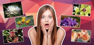 Fiyatları Dudak Uçuklatıyor! Dünyanın En Pahalı 6 Çiçeği