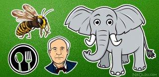 Filler Hakkında Ne Kadar Bilgilisiniz? İşte Filler Hakkında Bilinmeyen İlginç 15 Gerçek!