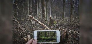 Yaşlandırma Uygulaması FaceApp'in Ardından Greenpeace'den Yeni Yorum: EarthApp!