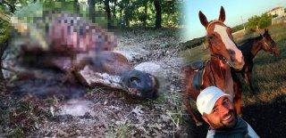 Bunu Yapan İnsan Olamaz! Atı Ormanlık Alanda Kesip...