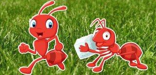 Minik Karıncalar Hakkında Neler Biliyorsunuz? İşte Karıncalar Hakkında 15 İlginç Bilgi...