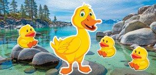 Dünyanın En Güzel ve Sıra Dışı 10 Ördeği