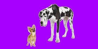 Rüyada Büyük Köpek Görmek Ne Anlama Gelir?