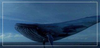 Mavi Balina Oyunu Nedir? Görevleri Nelerdir? Mavi Balina Hakkında Bilinmesi Gerekenler!