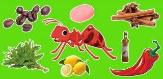 Karıncaları Evinizden Uzaklaştırmanın 10 Yolu